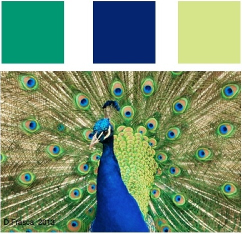 peacock_color