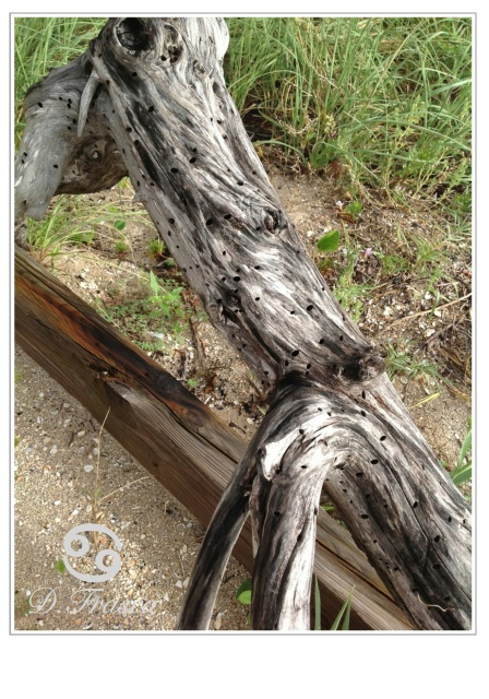 driftwood_coastal_color_palette