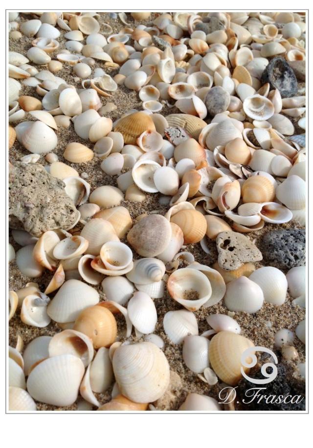 sea_shells_beach_colors