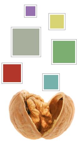 color-in-nutshell