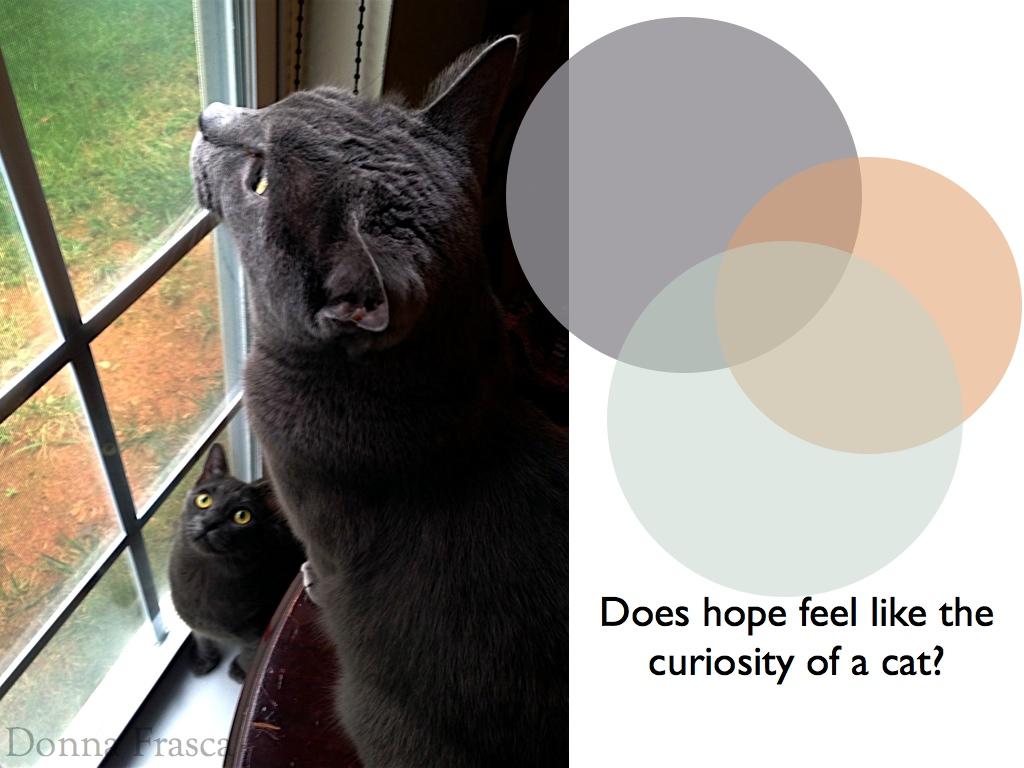 Color cats like - Color_cats_holistic 002