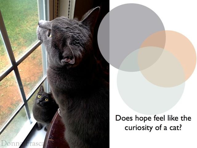 color_cats_holistic.002
