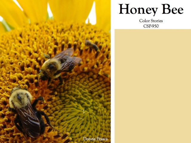 holistic_color_honey_bee.002