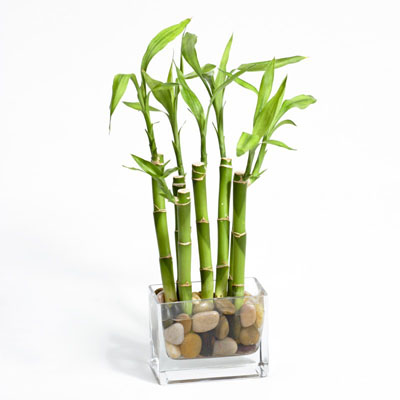 river-rock-bamboo-1_5