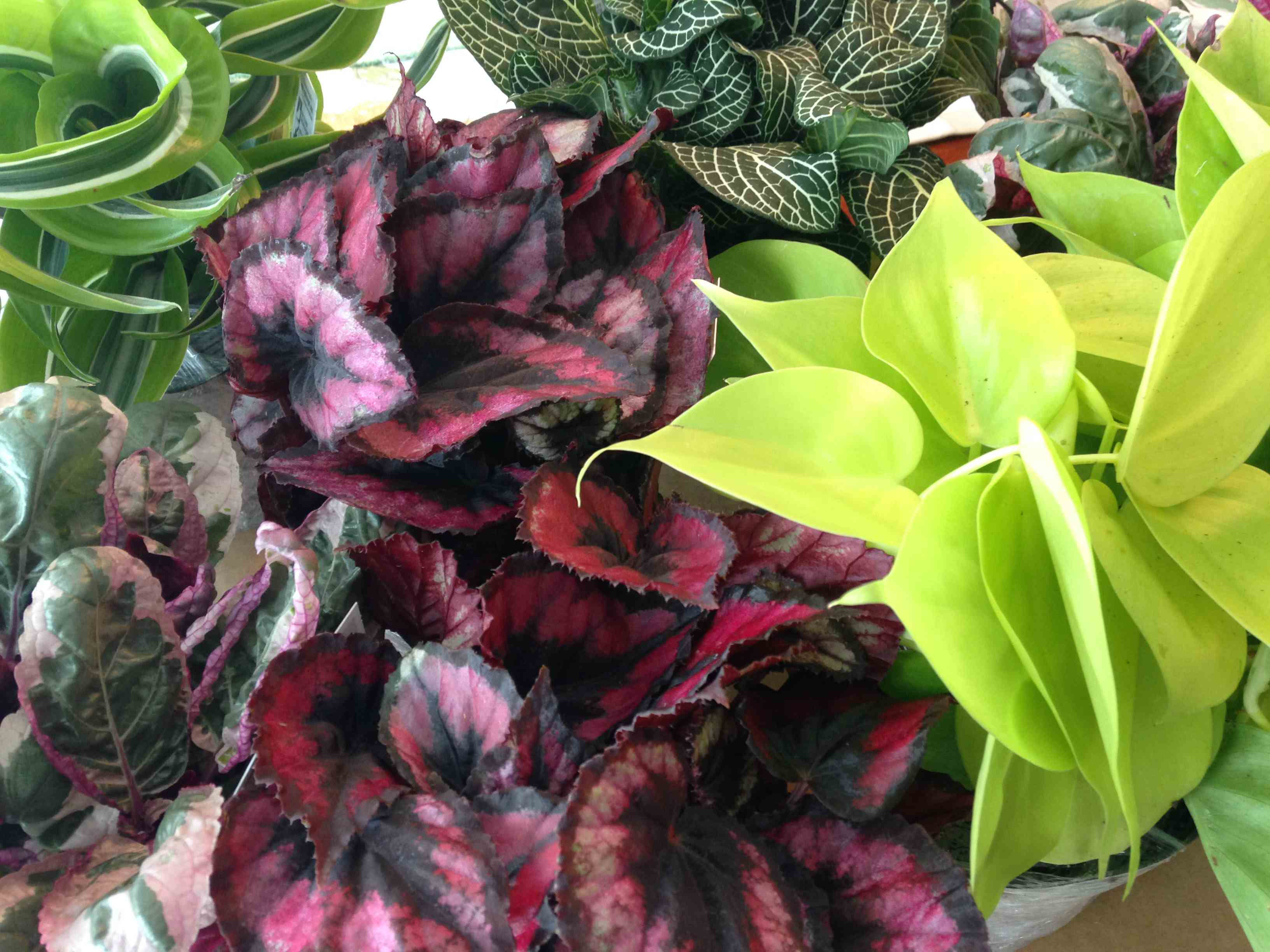 Bring Color Into Your Home With Exotic Angel Plants Decorating