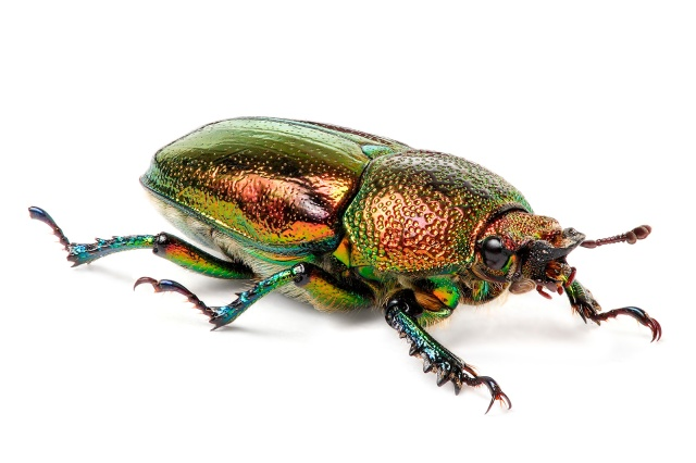 colorful_bug