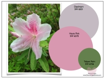 best-sherwin-williams-paint-colors-for-home-donna-frasca-color-expert.007