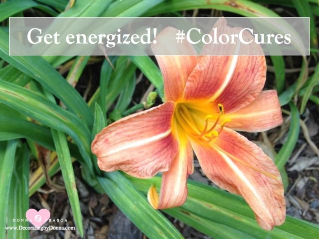 color-cures-color-palettes-virtual-paint-color-expert-donna-frasca.008