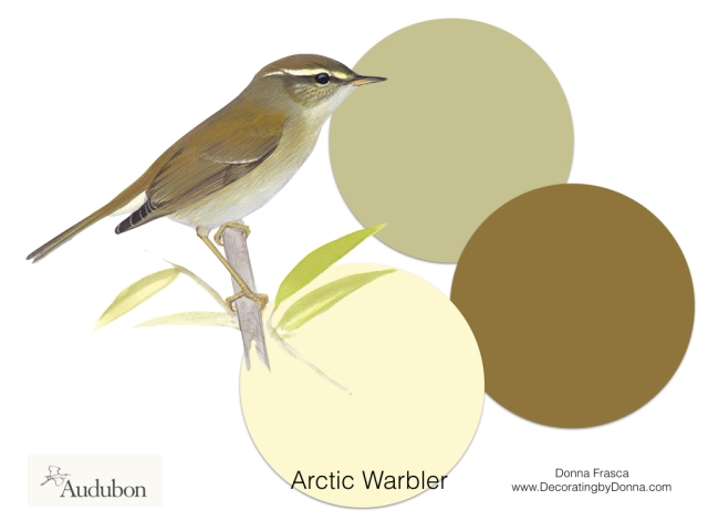 Audubon-birds-color-palettes.005
